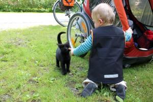 Pause mit Katze